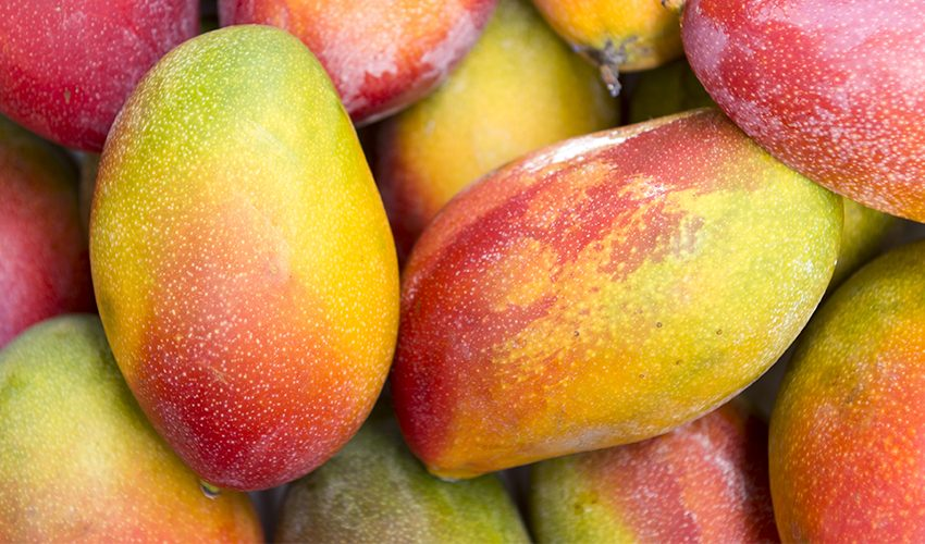 Freshmax Group | Growers and Exporters of Fresh Mangoes