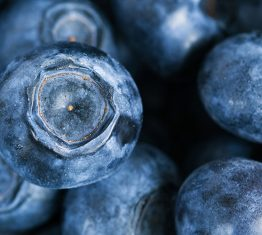 BerryCo Blueberry IP deal